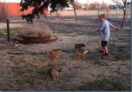 02-02-12 puppies iphone 10