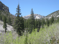 views in Baker Creek Photo