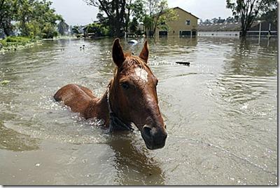 caballo agua