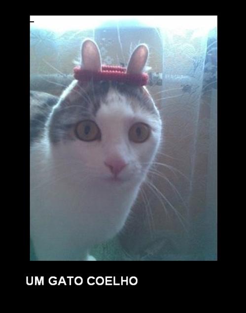 gatocoelho