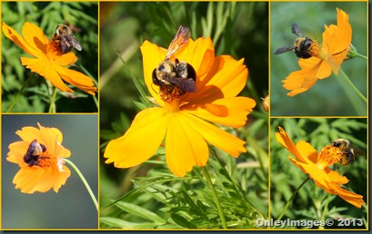 bee collage2