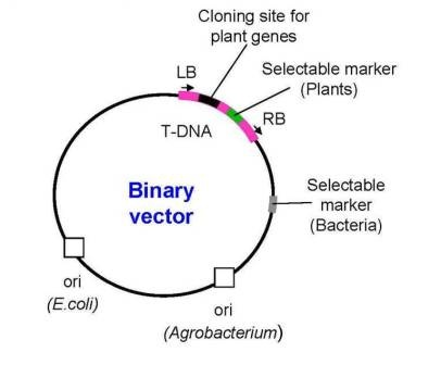 binary vector