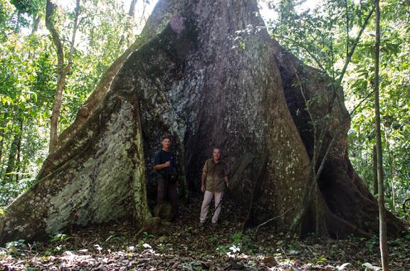 Charles Basset & Patrick Botto au pied d'un ceiba. Estacion Biologica Jaguarete, Rurrenabaque (El Beni, Bolivie), 23 octobre 2012