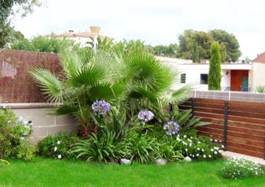 Decoraci n de jardines con palmeras dise o y decoracion for Disenos de jardines de casas