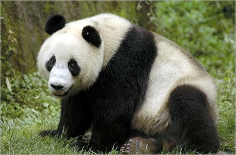 Pandas 01