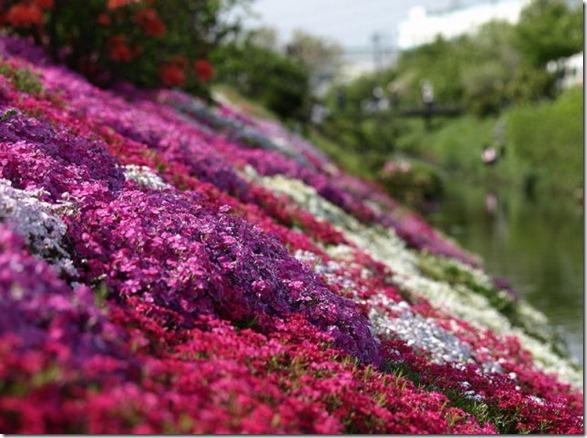 pink-park-japan-13