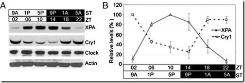 cry1-XPA