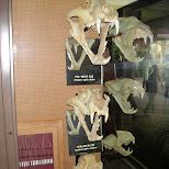 skulls at ueno zoo in Ueno, Tokyo, Japan