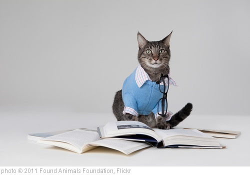'Max the Brown Tabby Cat with Books' photo (c) 2011, Found Animals Foundation - license: http://creativecommons.org/licenses/by-sa/2.0/
