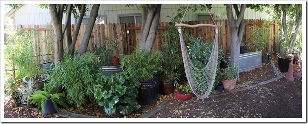 110612_backyard_pano