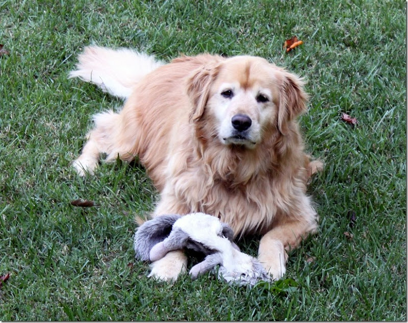 Oakley with Toy