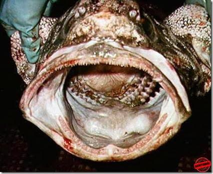 Ikan  Pelik ACHTUNG (8)