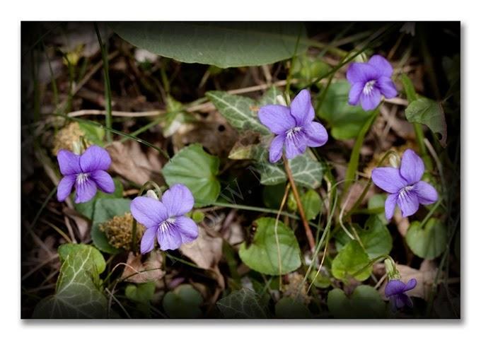 Spring 2 C Dog-violet