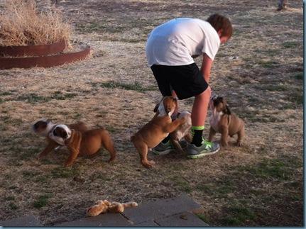 02-02-12 puppies iphone 03
