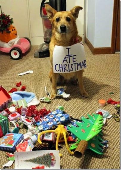 pets-hate-christmas-022