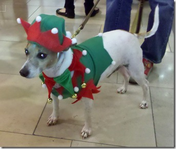 Chuy in Elf Suit Small