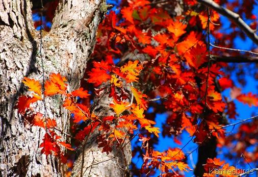 3. autumn color-kab
