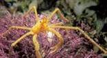 Méditerranée grotte à corail rouge macropode