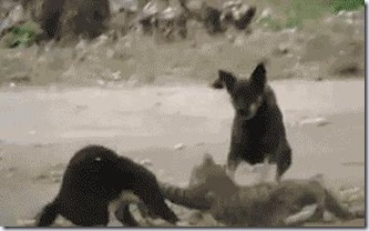 catvscat_stopdog
