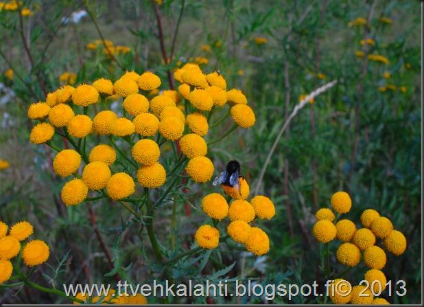 nikon E sarja 28mm silta kukkia 076