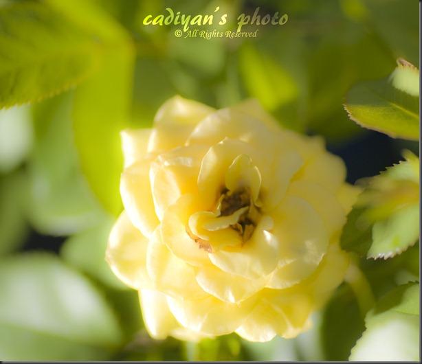 D700_2012-08-08_022