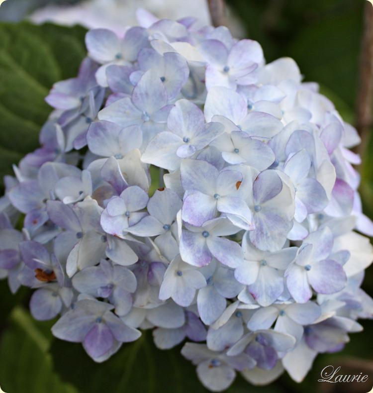 blu hydr