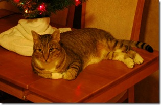 Christmas Kitty close