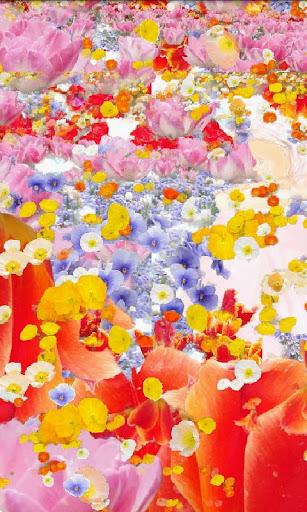 花livewall