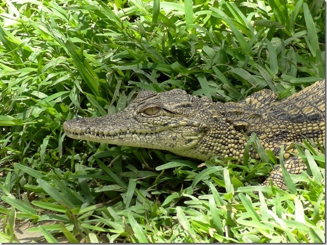 Kalimba_Reptile_Park-11_thumb