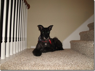 1.  Lucy relaxing on stairs