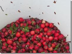cranberry bog 12