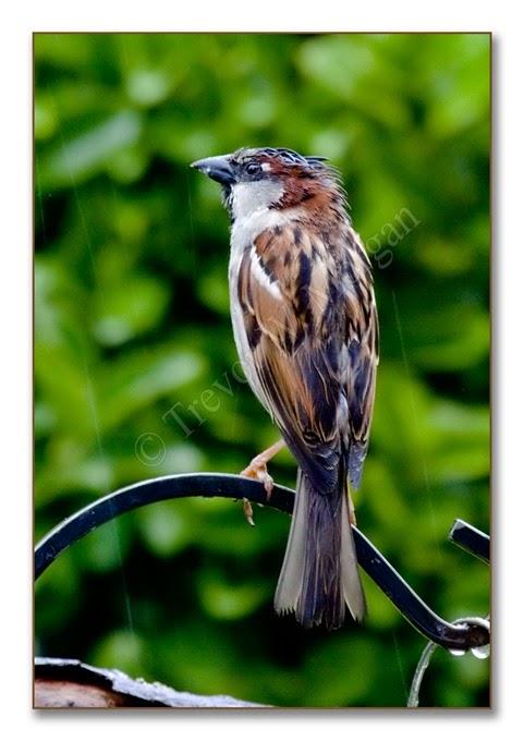 Wet Birds 3  HS