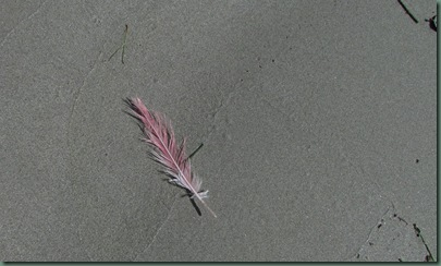 feather from rosette spoonbill