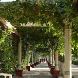 Turfan - Treillis de vigne allée
