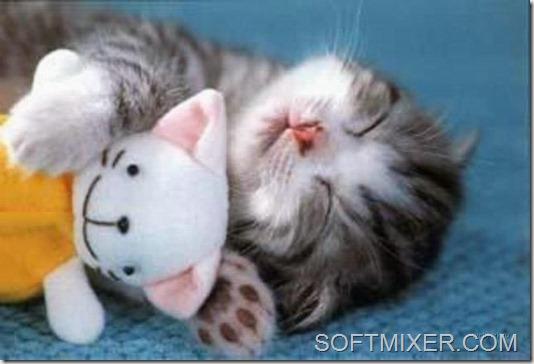 slp_cats_53