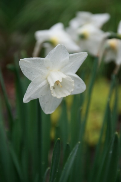 Daffs7