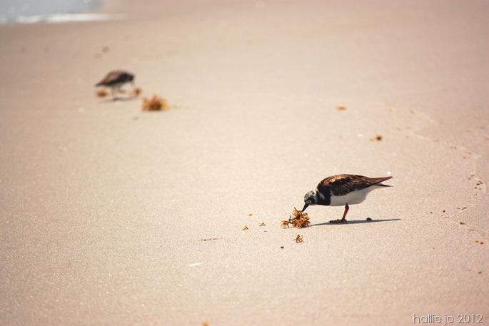 Beach57
