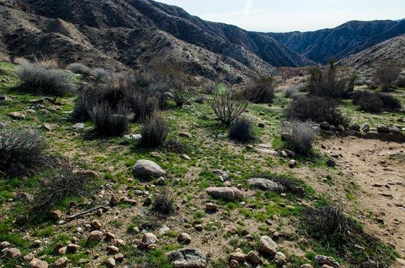 Big Morongo Canyon (26 of 63)