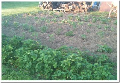2011-06-26 Garden June 26