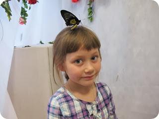 бабочки 037