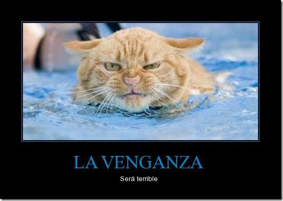 desmotivador gato