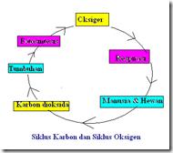 siklus Karbon & Oksigen