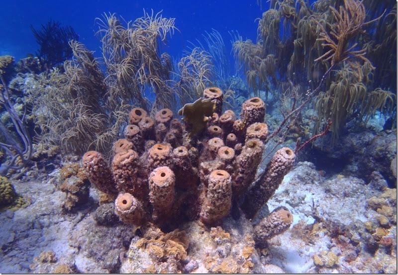023c korallen