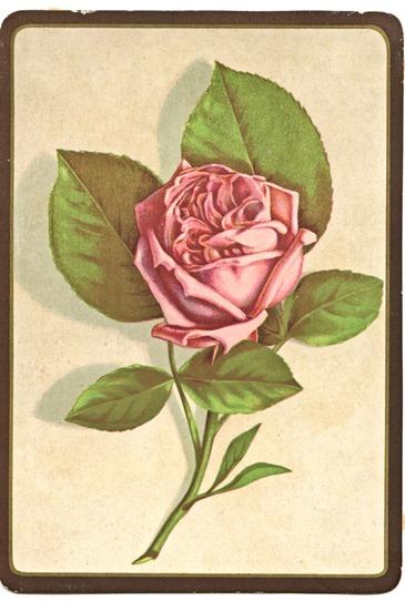 rosecardgfairy004