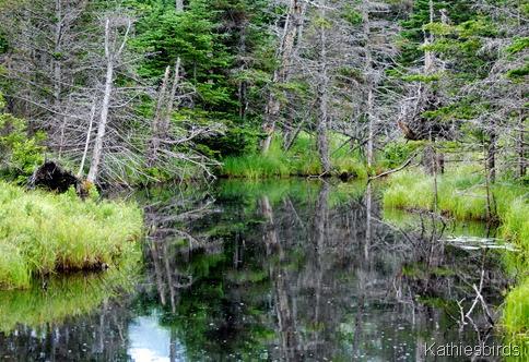 11. beaver pond-kab