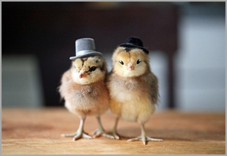 pollitos-con-sombrero