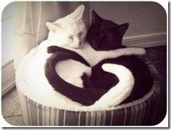 lover cats