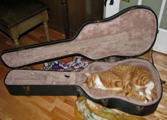 gatos durmiendo (2)