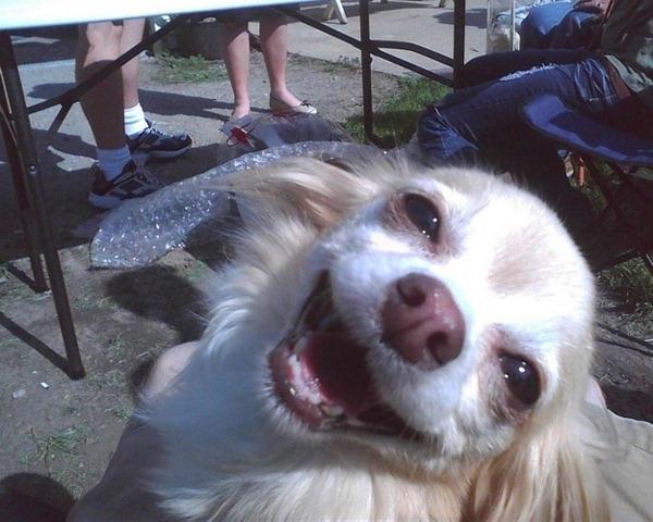 perros divertidos (3)