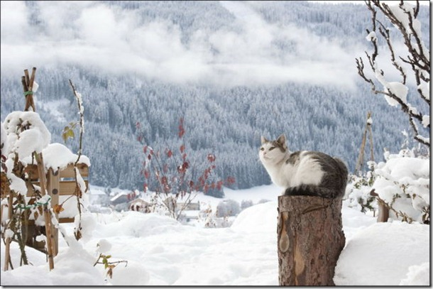 cats-play-snow-20